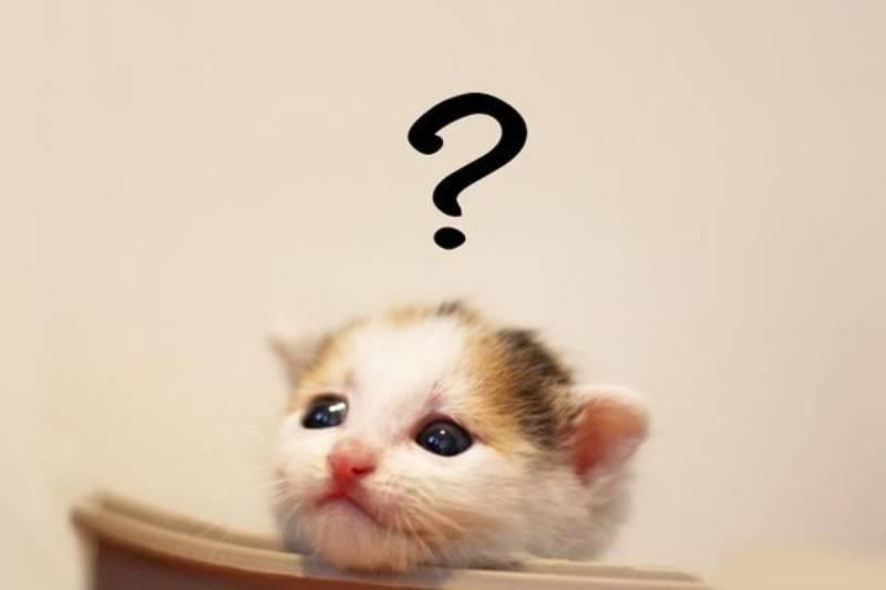 疑問を浮かべる猫の画像